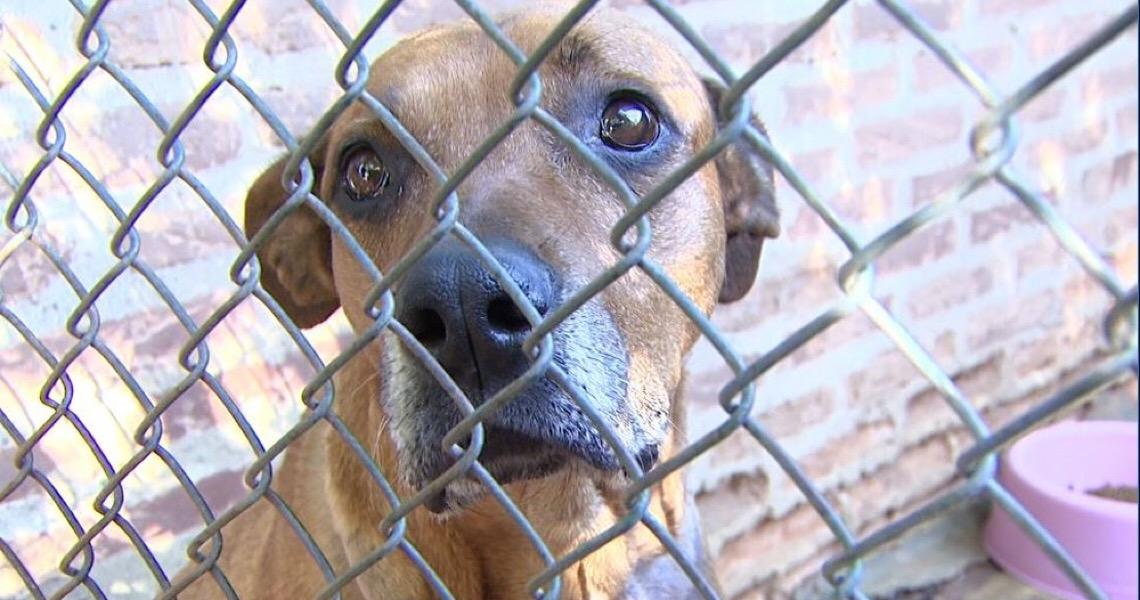 Agressores de animais serão obrigados a custear despesas veterinárias, no Distrito Federal