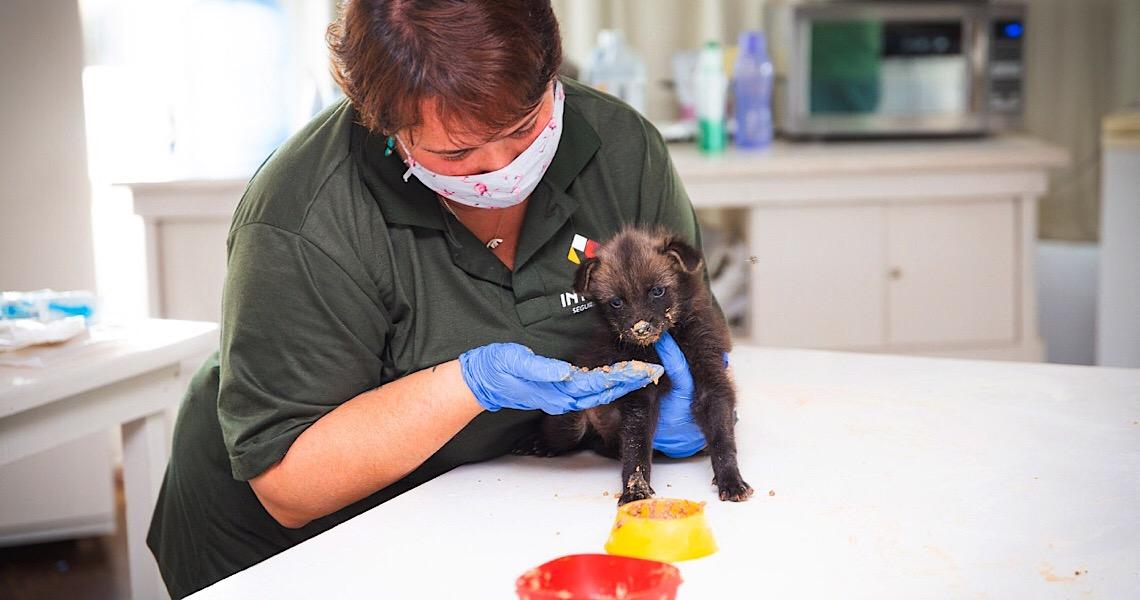 Zoo de Brasilia acolhe mais de 50 animais órfãos
