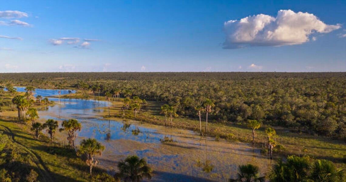 Amazônia, Pantanal, Cerrado: Conheça melhor os seis biomas brasileiros