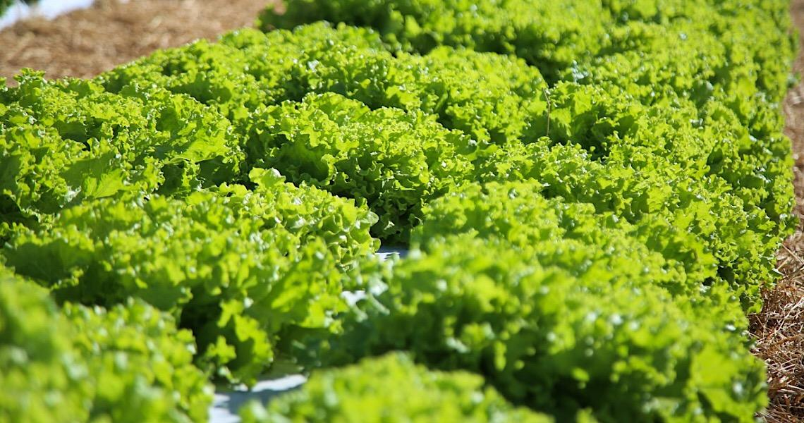 Semana Mundial da Alimentação: Chefe da ONU pede revisão de sistemas alimentares