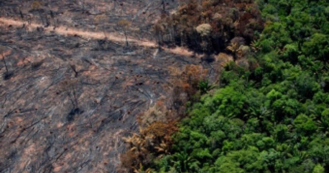 Juiz bloqueia quatro fazendas no Pantanal por desmatamento de 1,4 mil hectares; Promotoria quer indenização de R$ 136 milhões