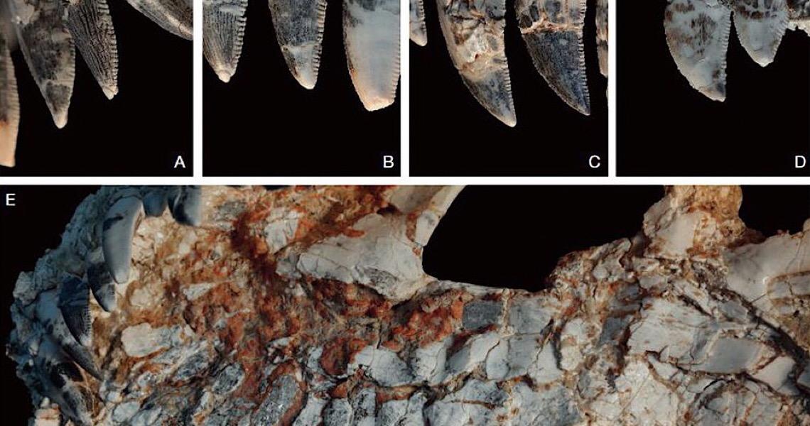 Fóssil achado em Minas Gerais pode revelar novidades sobre dinossauros