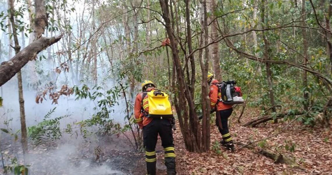 Bombeiros do Distrito Federal retornam de missão na região do Pantanal