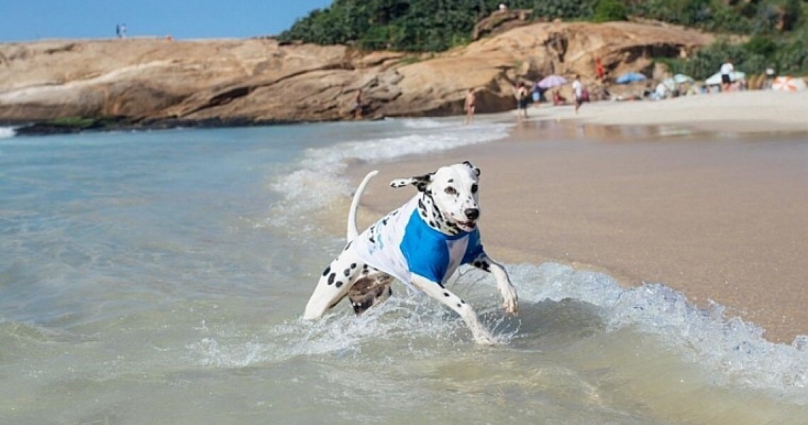 As praias brasileiras onde cães são bem-vindos