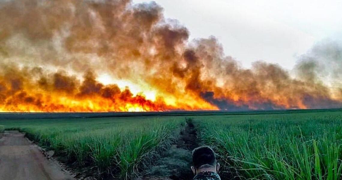 Gado, carvão, cana e soja estão por trás do desmatamento milionário no Pantanal