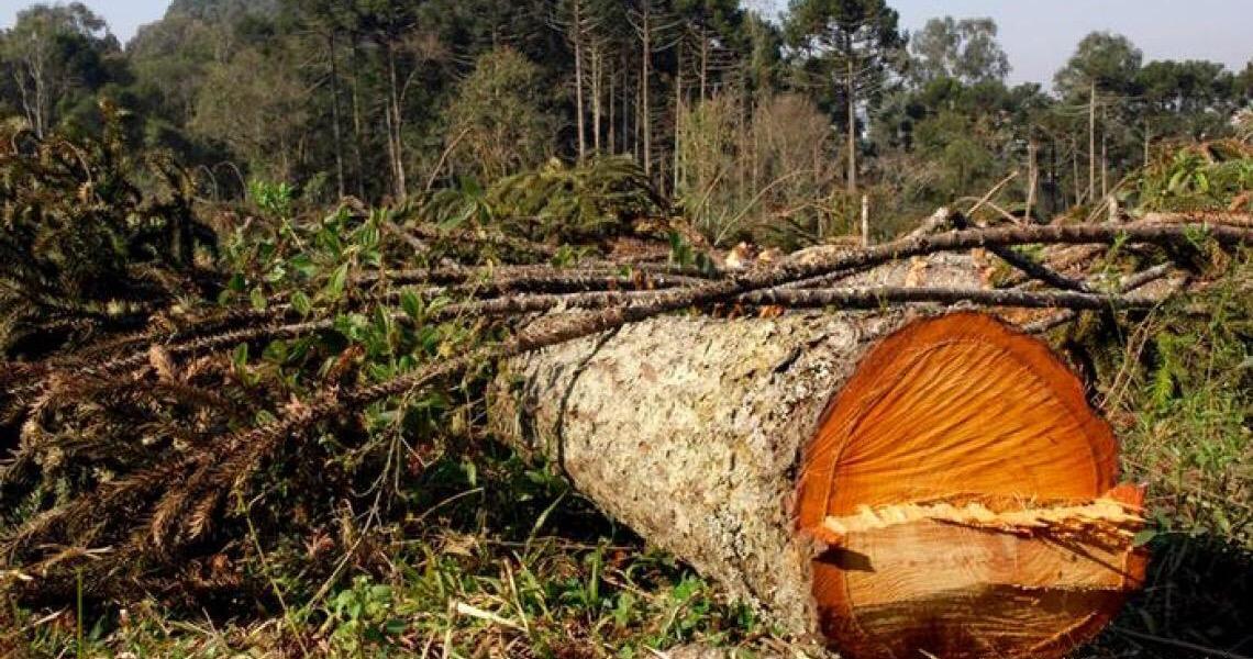 Obra de multinacional francesa ameaça bioma mais castigado do Brasil