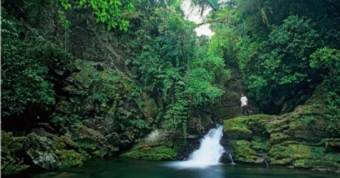 Brasil tem quase 20% de espécies de animais  e plantas ameaçados