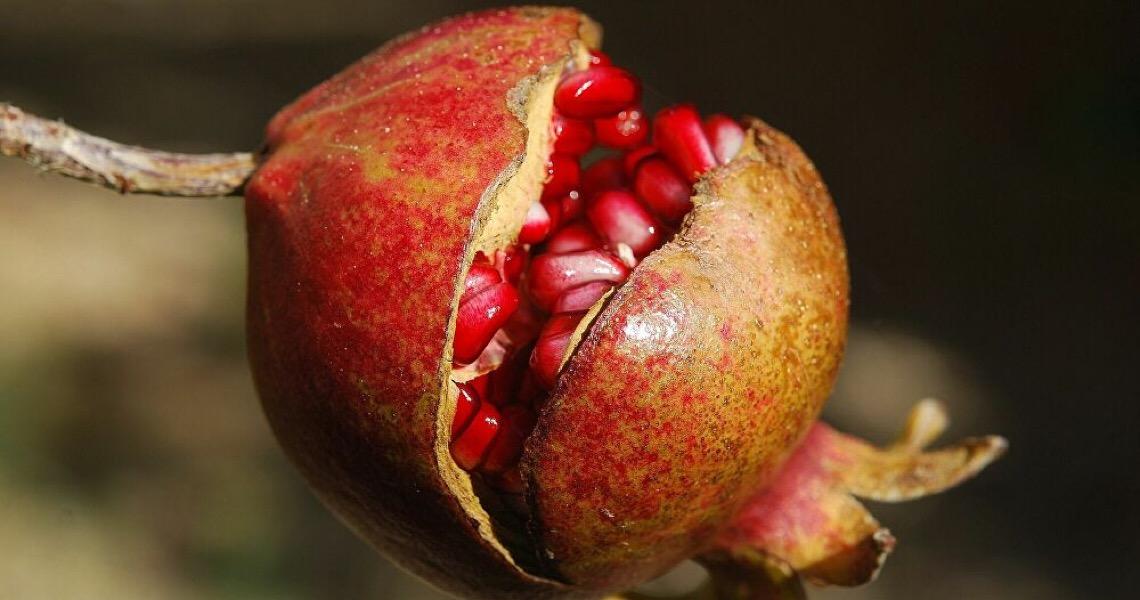 Encontrado alimento que pode diminuir em até 97% a chance de transmissão do coronavírus