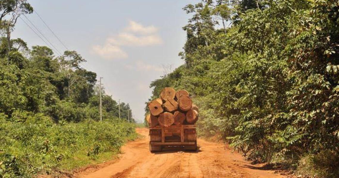 Aliança de bancos, indústria, agro e ONGs vê responsabilidade do governo em venda irregular de madeira
