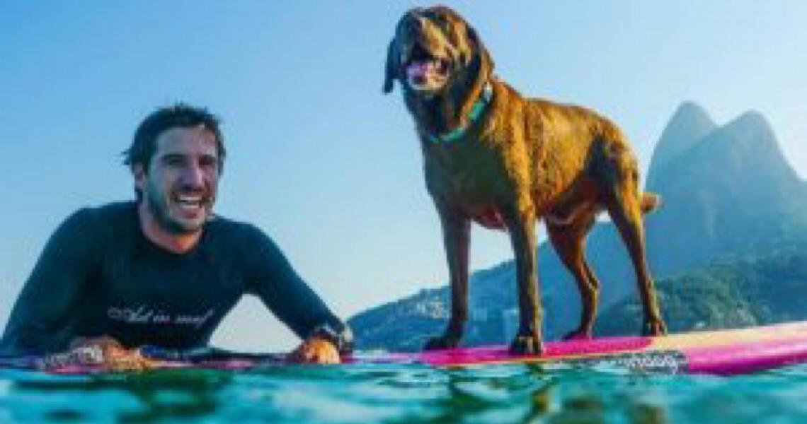 O cão que vive sobre as ondas