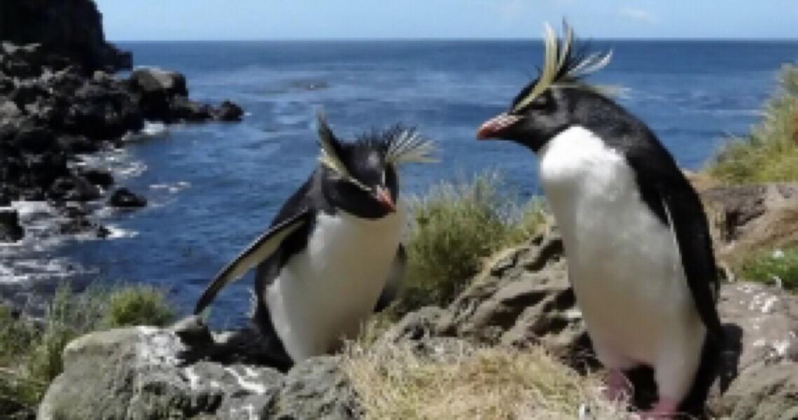 Tristão da Cunha e a quarta maior área marinha protegida