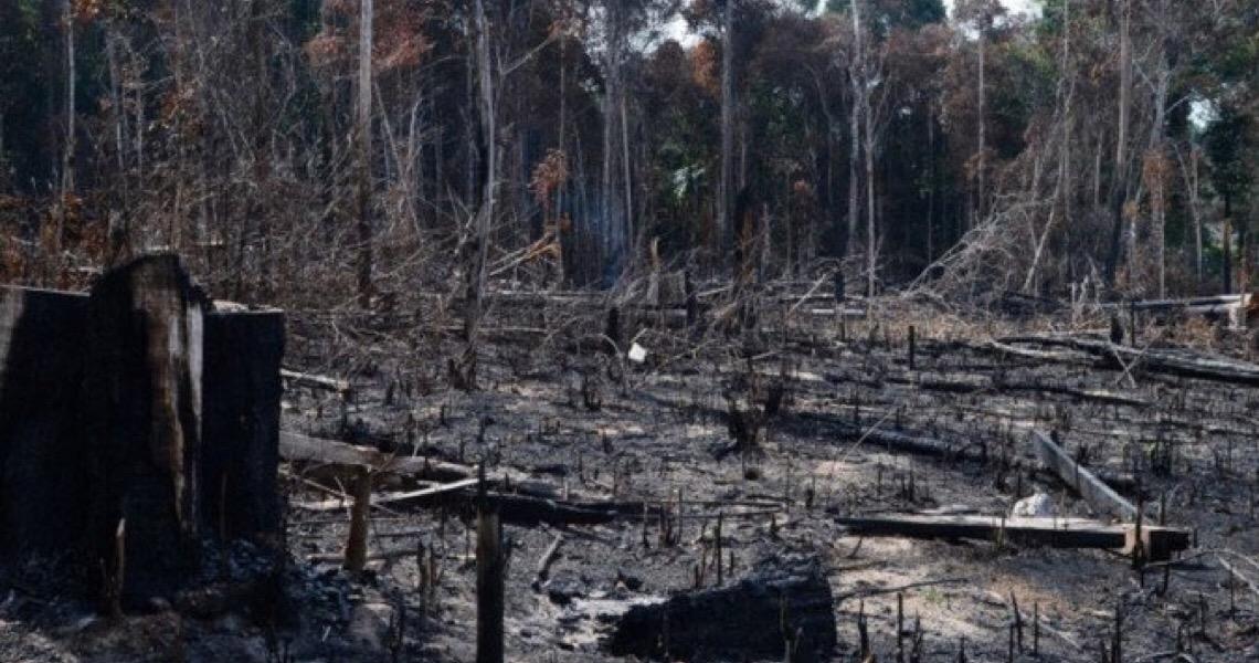 Desmatamento no Brasil trava acordo comercial entre União Europeia e o Mercosul