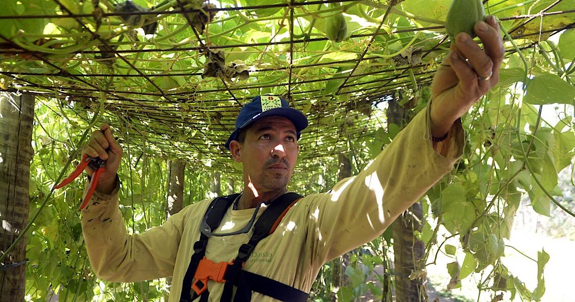Brasília está entre líderes com maior valor da produção agrícola em 2019