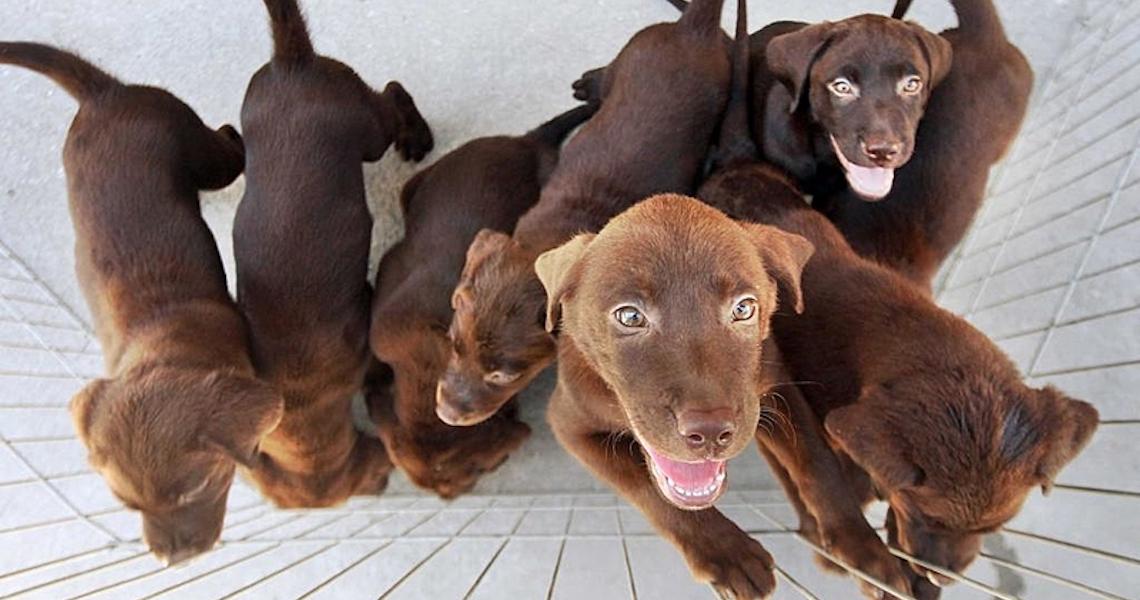 Curitiba tem primeiros casos de cães confirmados com covid-19 no país