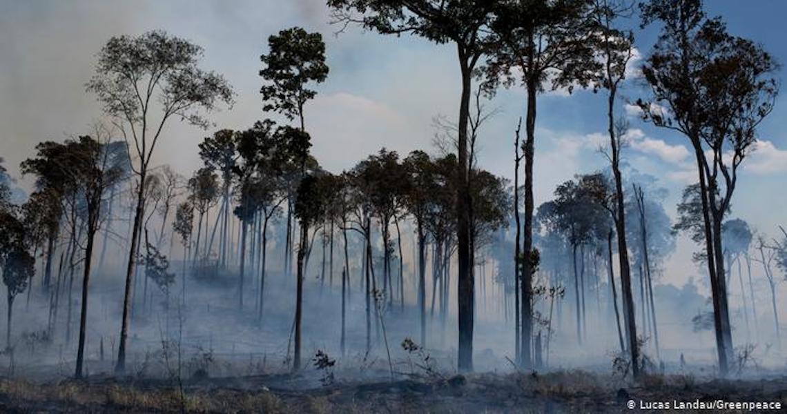 Pará completa 15 anos como líder em queimadas e desmatamento