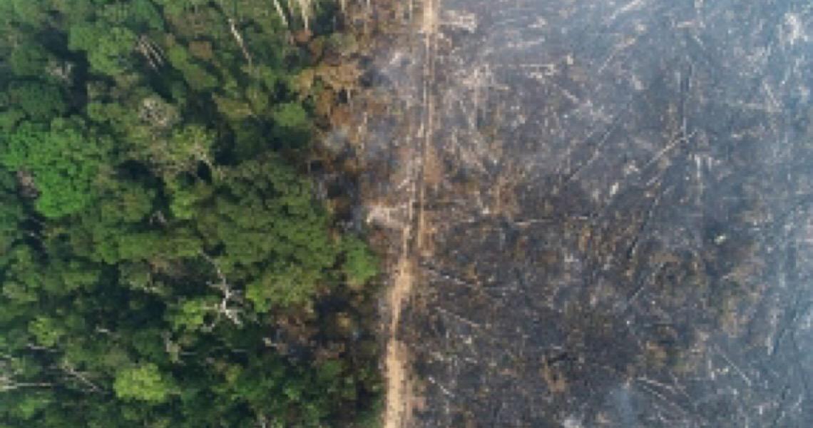 Jihad Bolsonarista avança: Amazônia é maior vítima