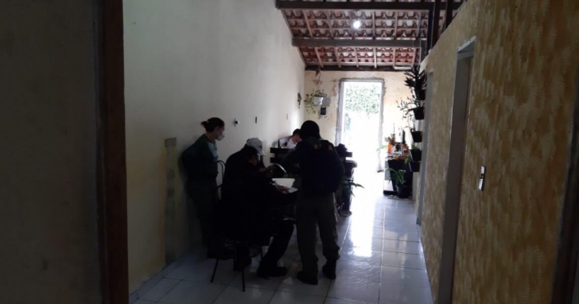 PF abre 2ª etapa da Operação Urutau e prende 11 por tráfico de araras, jabutis, macaquinhos e tucanos
