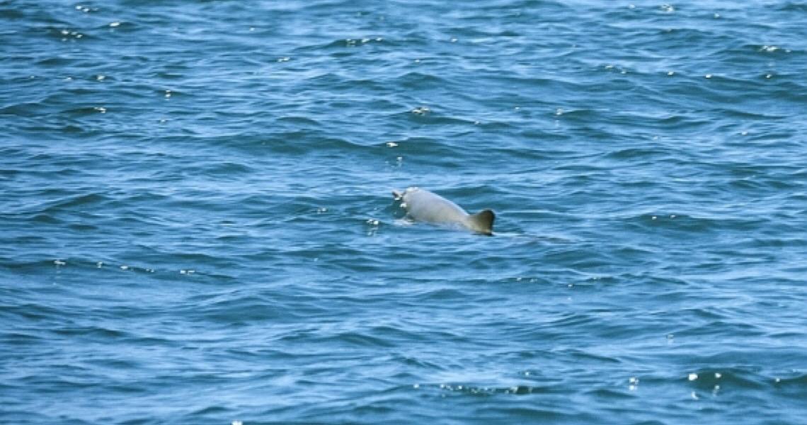 Golfinho ameaçado é descoberto em área protegida que Bolsonaro quer extinguir