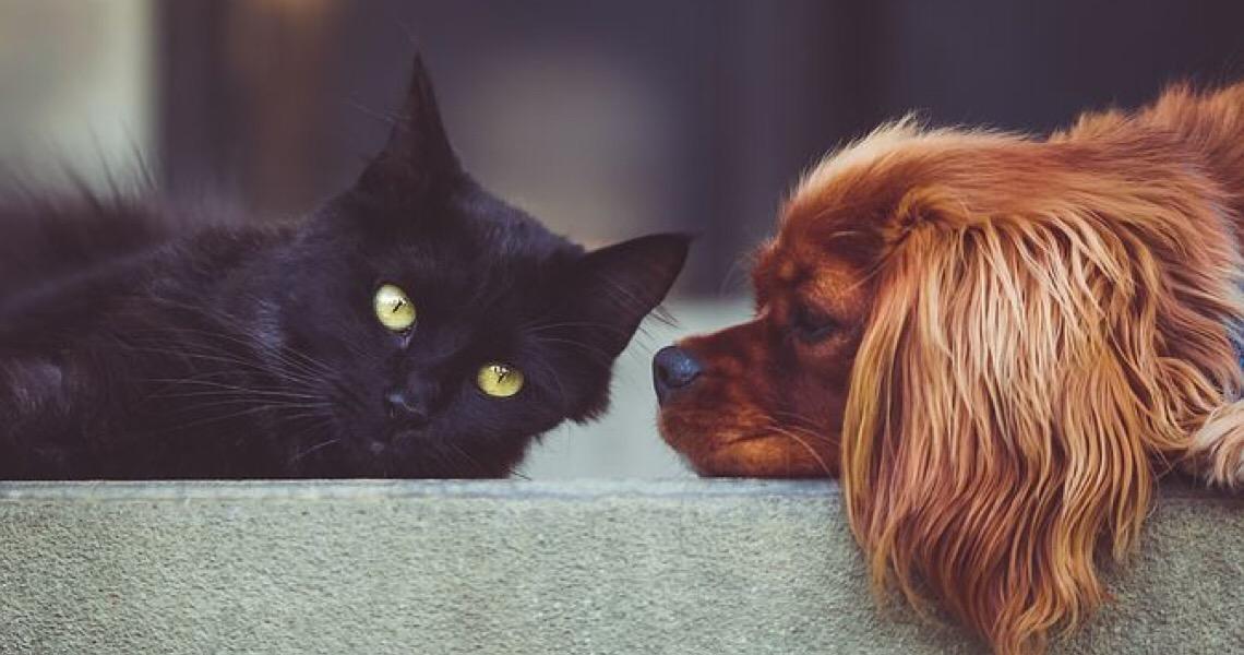 Quais cuidados devemos ter com cães e gatos nas festas de final do ano? Veja
