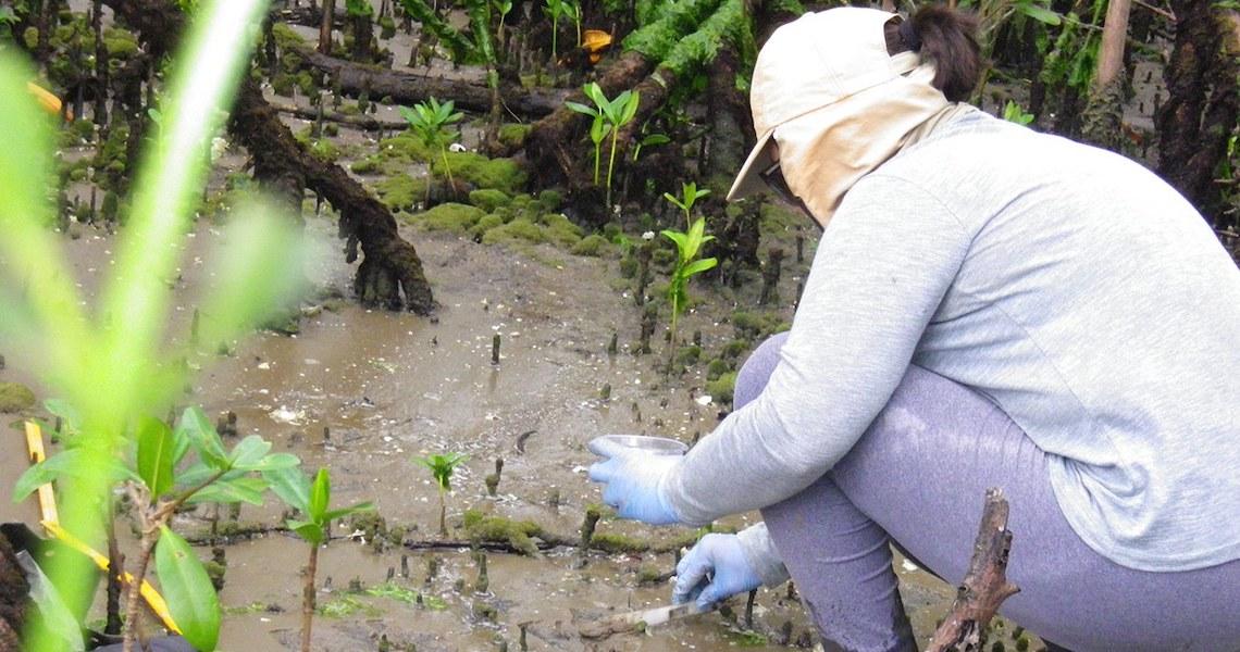 Baía de Paranaguá: Pesquisa da UFPR detecta substâncias cancerígenas