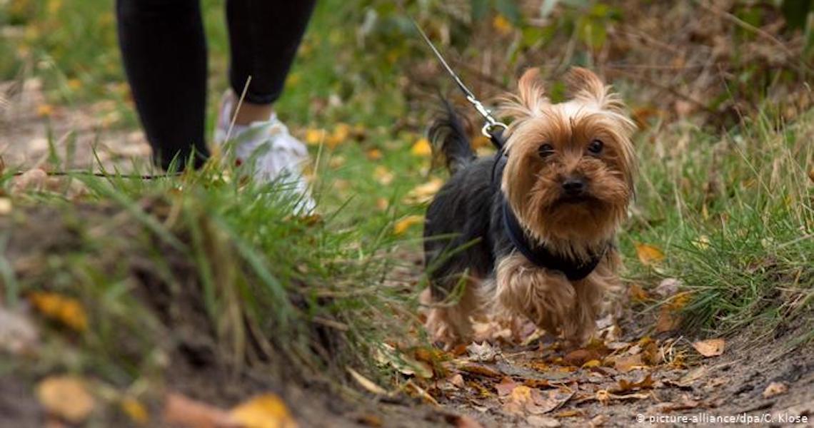 Cães reconhecem número limitado de palavras, aponta estudo