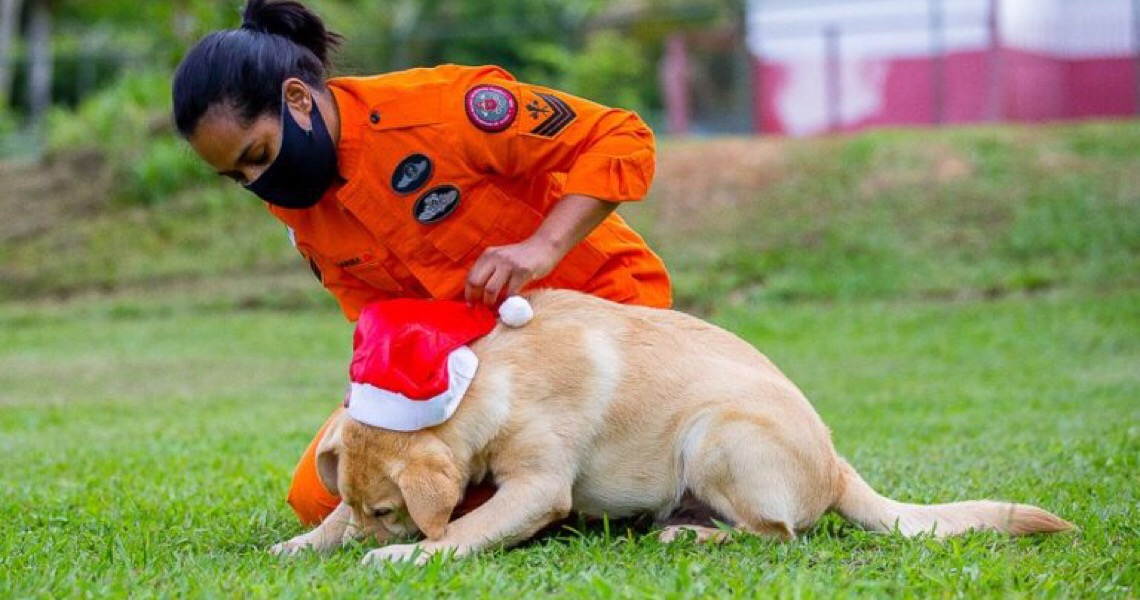 Proteja os pets dos fogos durante o Natal e Ano-Novo