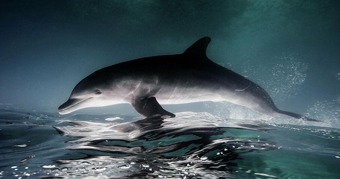 Doença de pele devastadora que ataca golfinhos está ligada à mudança climática, diz estudo