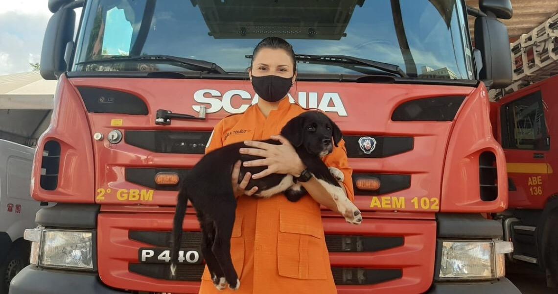 Após 'vaquinha' de bombeiros, cão atropelado se recupera de cirurgia