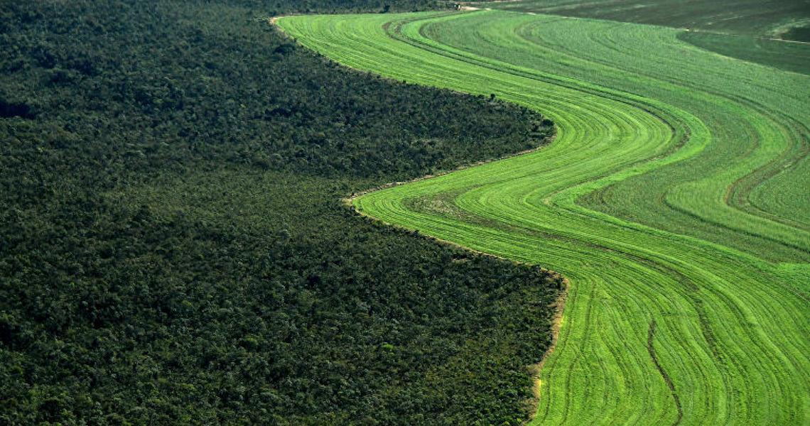 Desmatamento no Cerrado este ano foi o maior desde 2015 e equivale a 5 cidades de São Paulo
