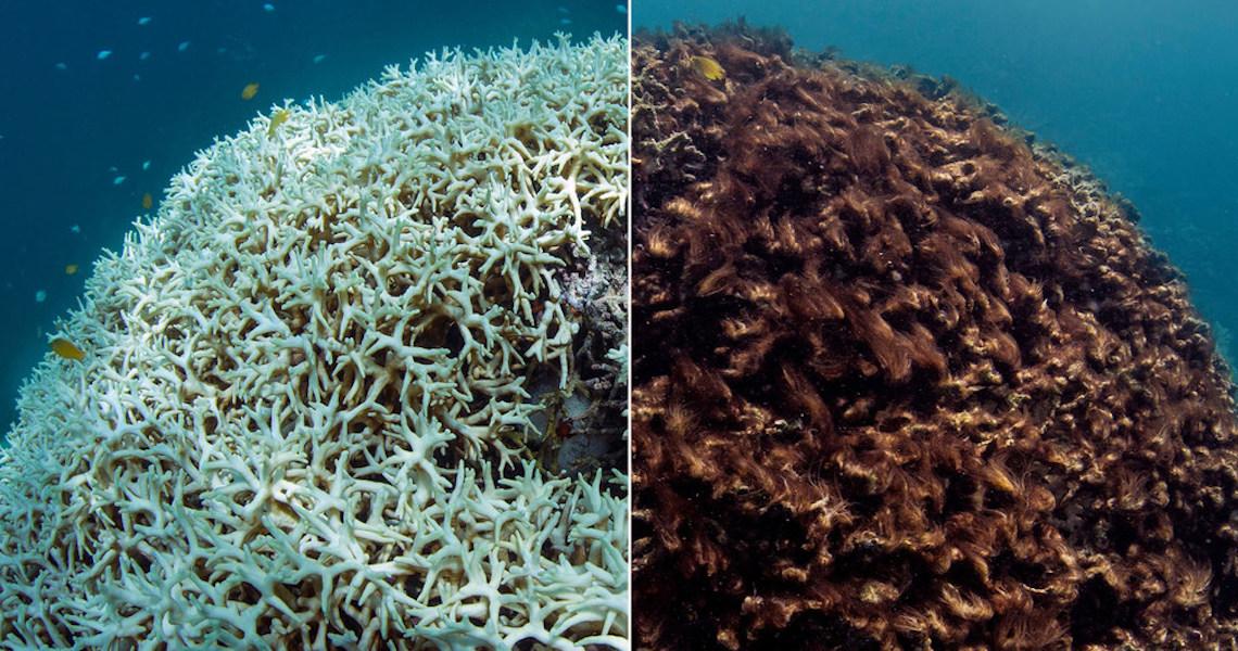 "Agência da ONU teme que branqueamento de corais ""se torne normal"""