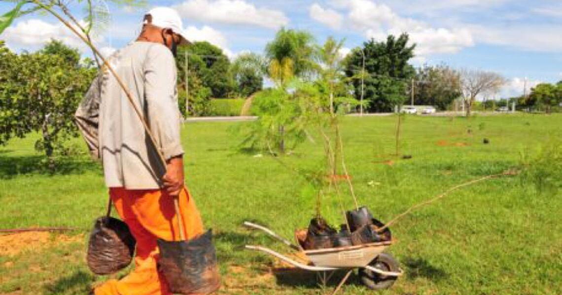 Mais de 2 mil mudas estão sendo plantadas no Lago Norte