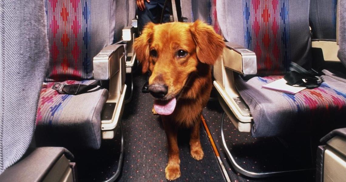 Por que pagamos tarifa para viajar com o pet na cabine se ele vai no chão?