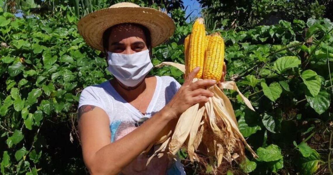 Cerrado Orgânico e Big Box: Uma parceria sustentável