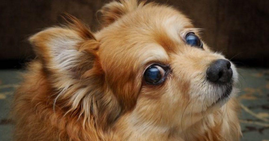 Nomes de cachorro mais usados por brasileiros