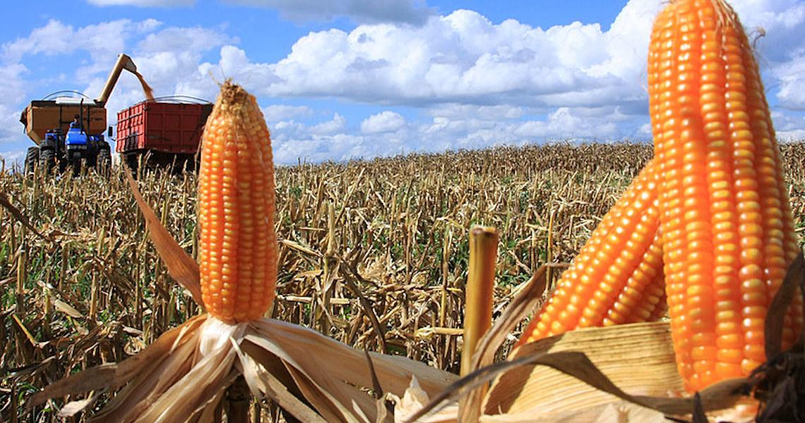 México proíbe glifosato e milho transgênico; agronegócio tem 3 anos para se adequar
