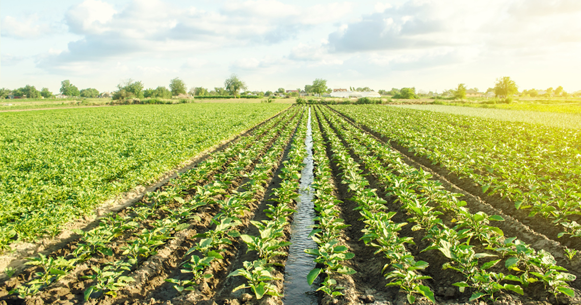 Título verde pode injetar R$ 700 bilhões na agricultura brasileira até 2030