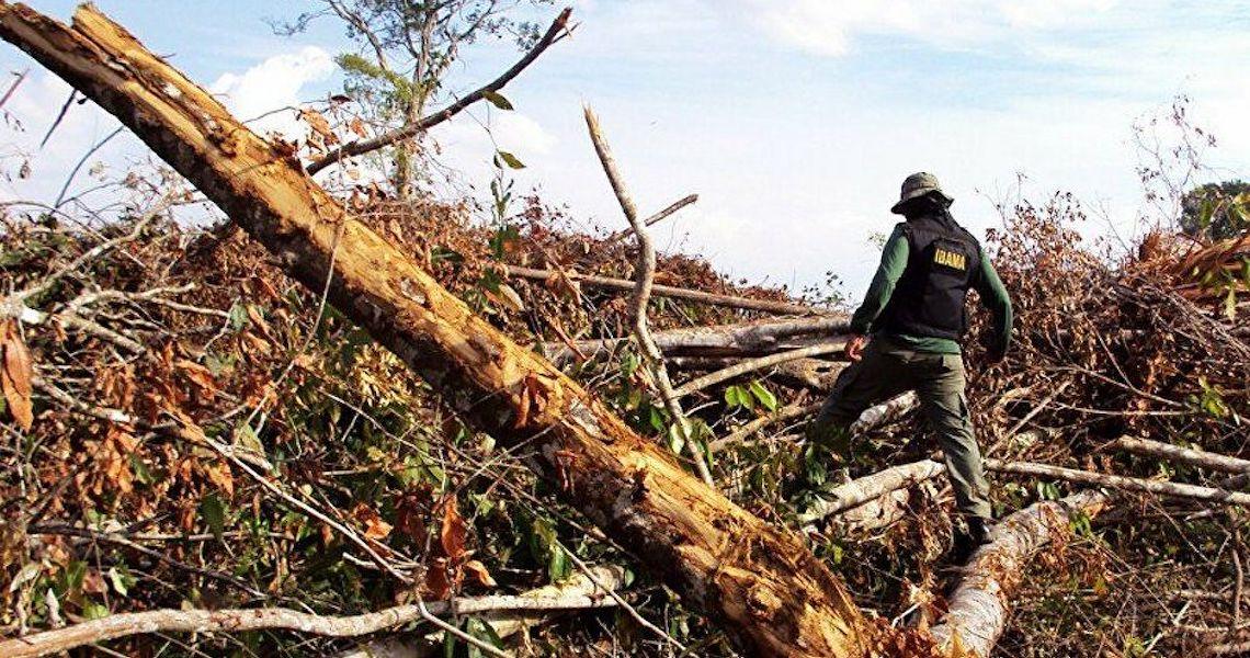 Piores índices de desmatamento na Amazônia registrados pelo Deter são do governo Bolsonaro