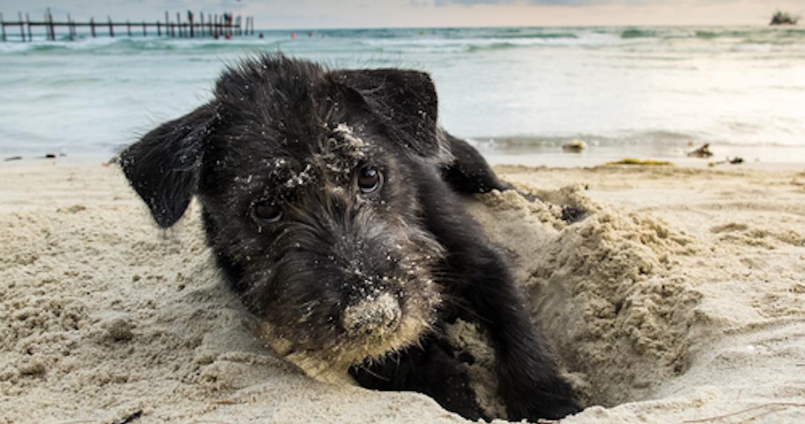 Pets na praia: O que levar