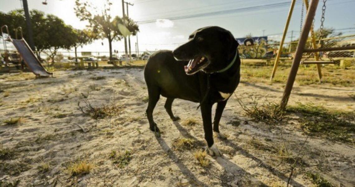 Governador Ibaneis Rocha sanciona lei que proíbe acorrentar animais no Distrito Federal