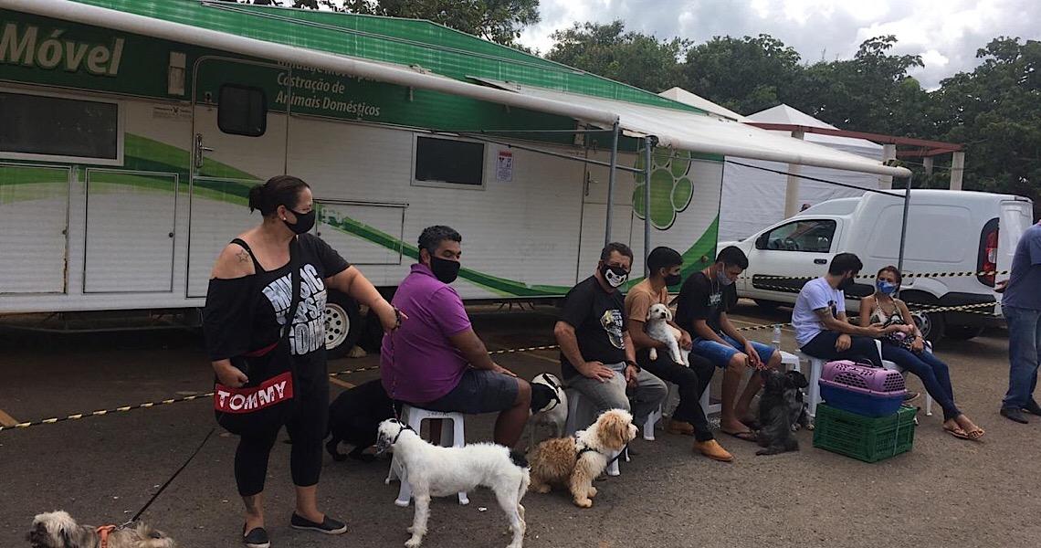 Começa campanha de 2021 para castração de cães e gatos no DF