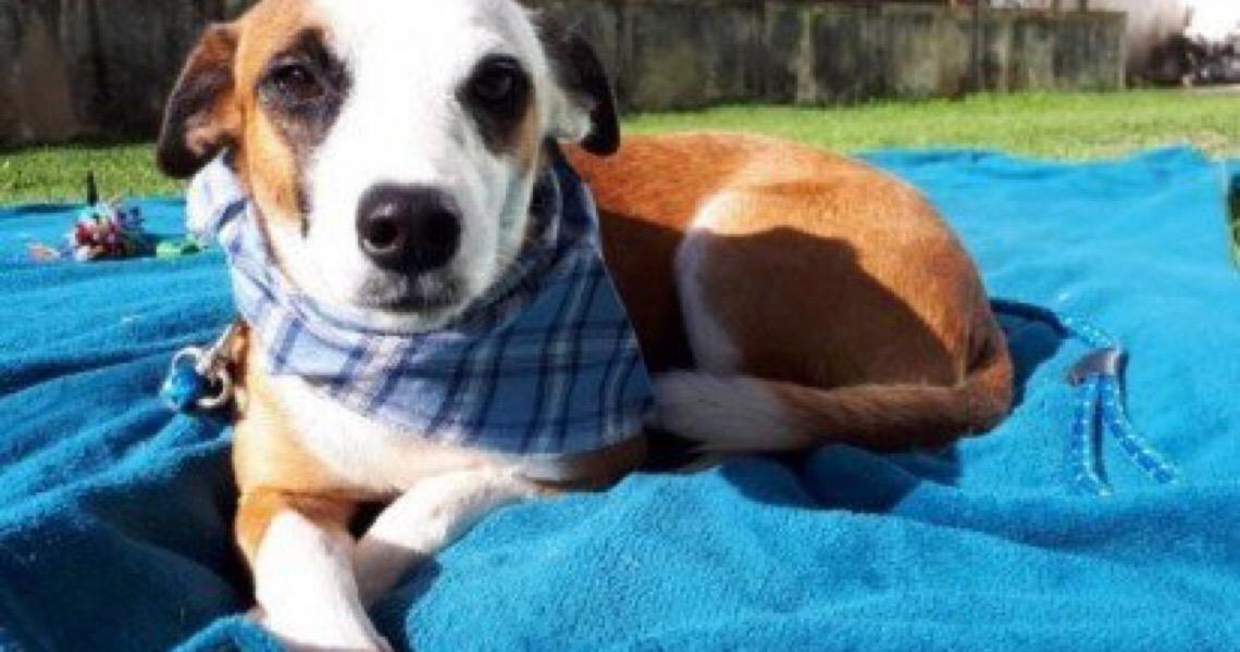 Ibram-DF anuncia mais de 1,4 mil vagas para castração de cães e gatos