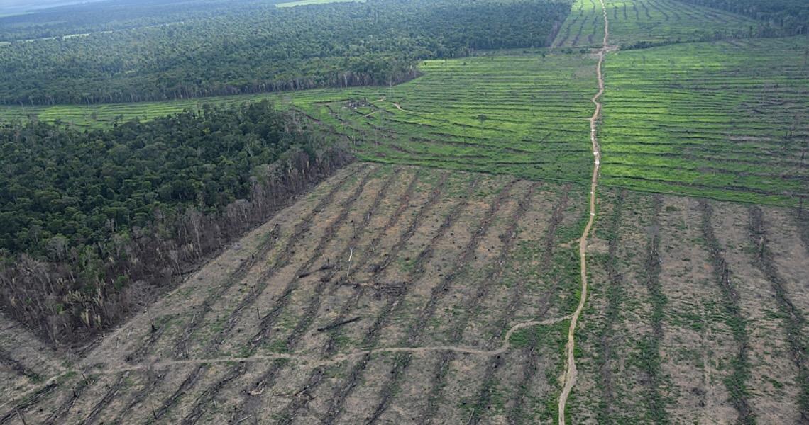 Amazônia em destruição: Entenda e veja como acontecem as fases do desmatamento