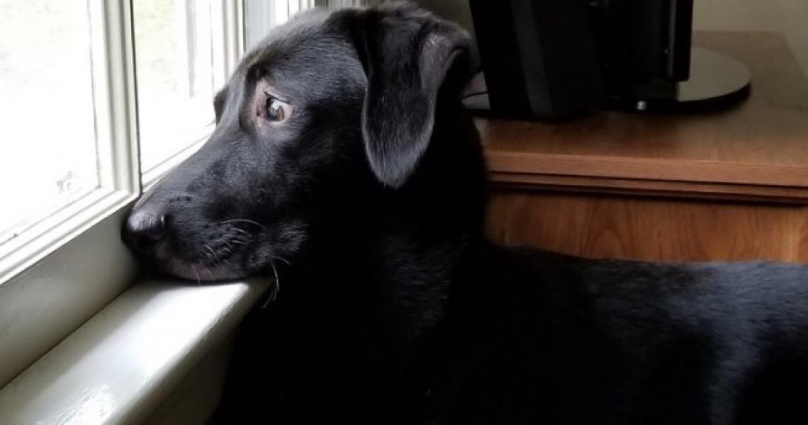 Você se dedica o suficiente ao seu cachorro?