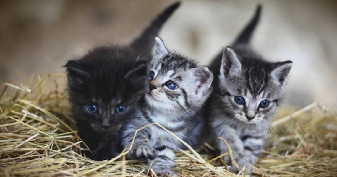 Nomes para gatos: Confira o Top 10 dos mais populares do Brasil
