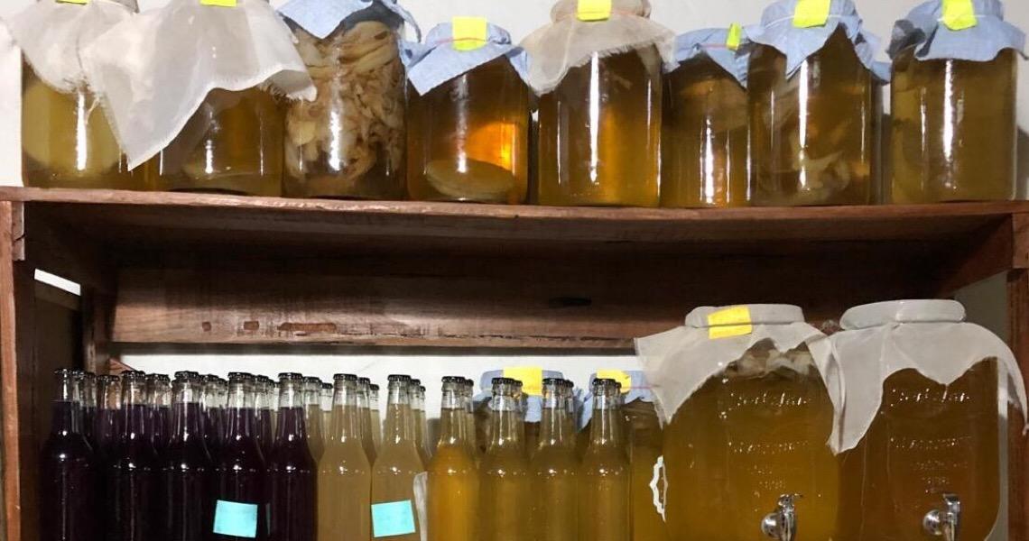 Casal no DF produz kombucha. Conheça essa bebida