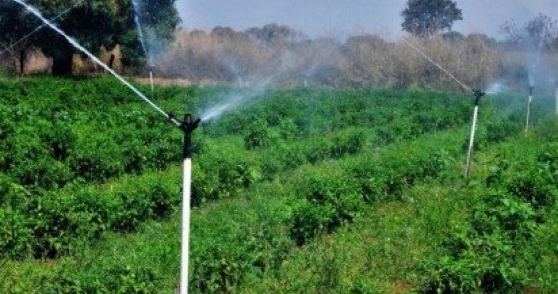 Projeto Produtor de Água, da Adasa, conquista 2º lugar em concurso internacional