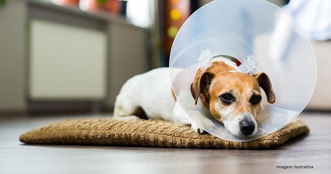 Danos sofridos por animal durante procedimento em pet shop geram dever de indenizar
