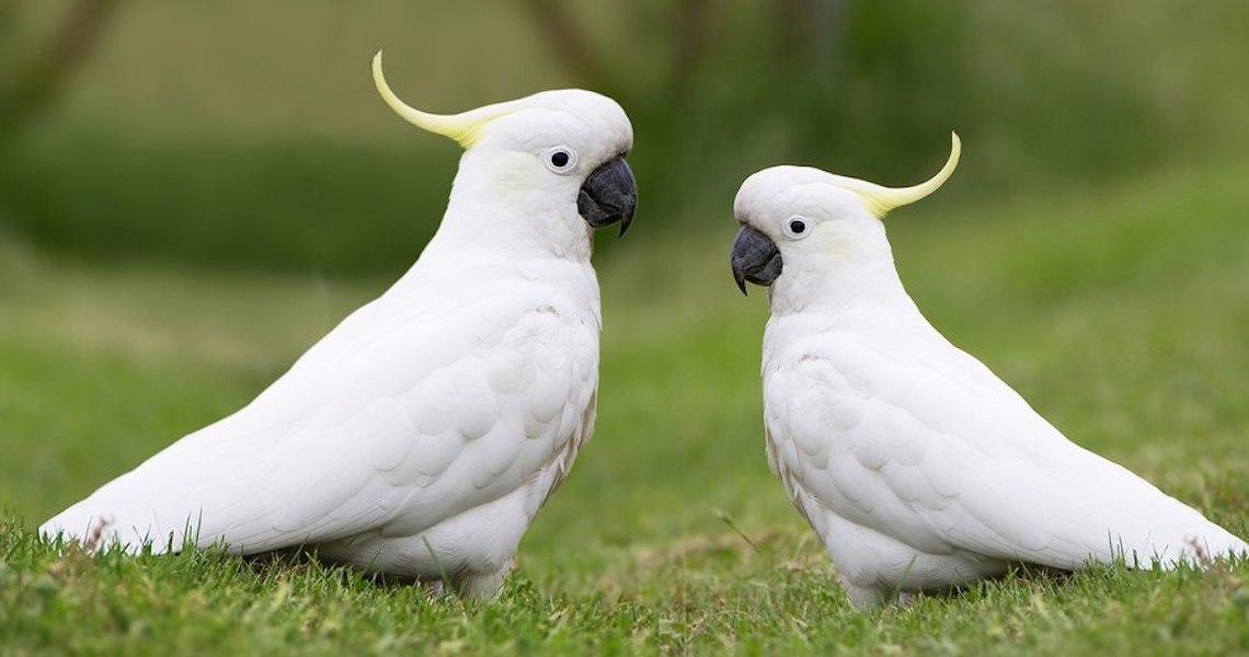 Aves silvestres: Saiba quais os cuidados necessários para ter uma em casa