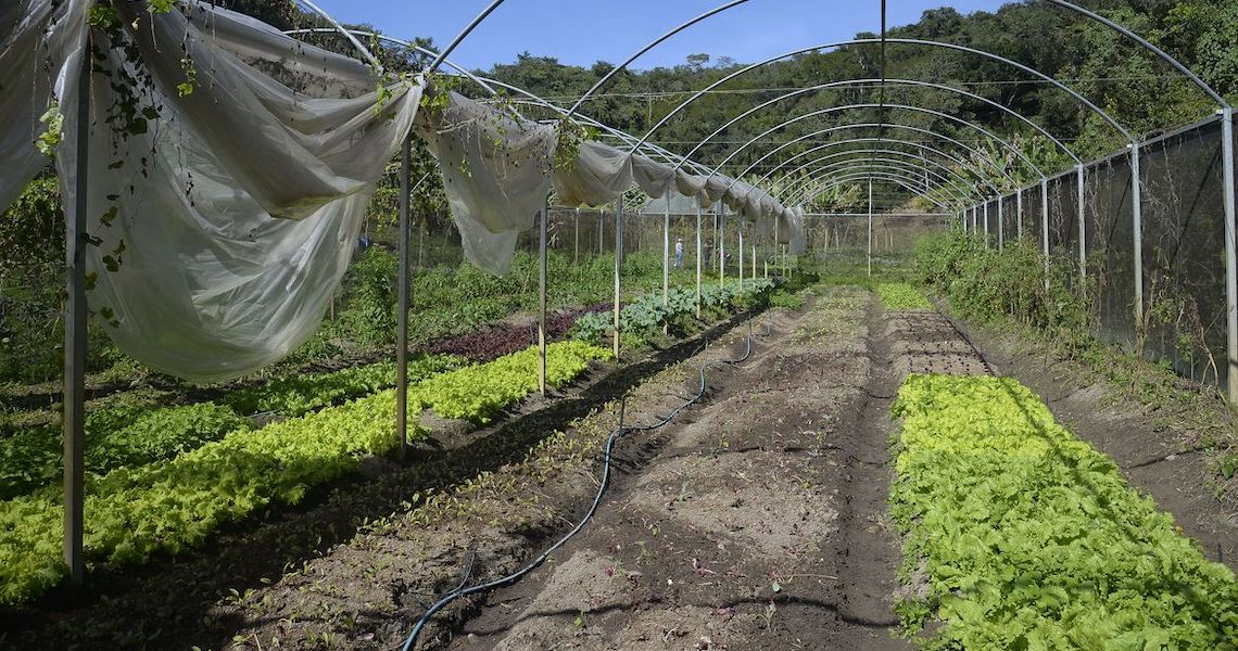 Instrução normativa prevê boas práticas para produção de folhosas