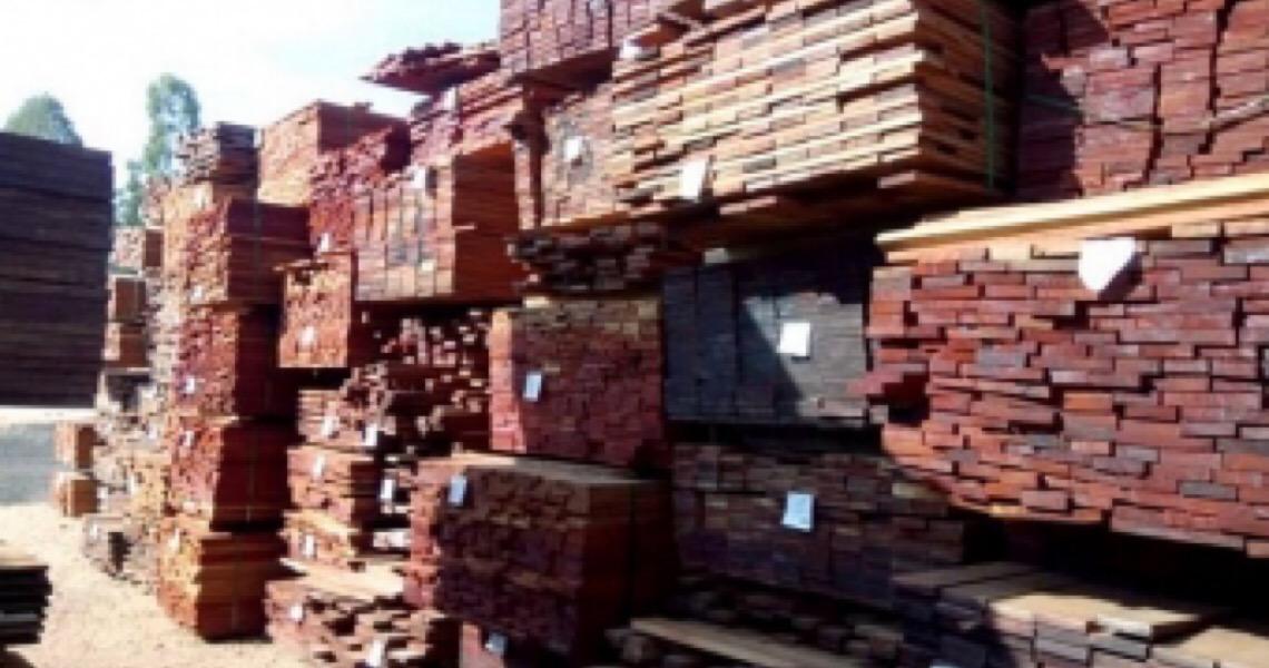 Após apreensão recorde, governo cancelou multa e liberou madeira para exportadora investigada
